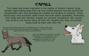 Capall Breed Sheet 1 by SirJudeNolan