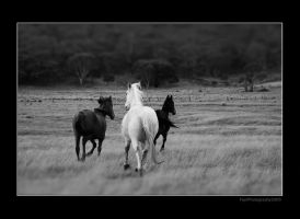 horses by layoxxx