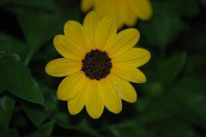 Small Bright Yellow Flower by Larah88