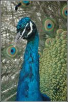 perfect plumage by Cmac13