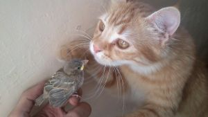 cat and bird by ammar-noxchi