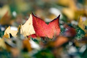 Automne by ketoo