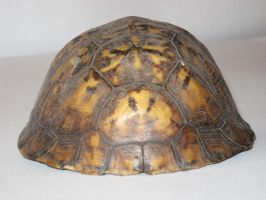 Tortoise Shell 2 by markopolio-stock