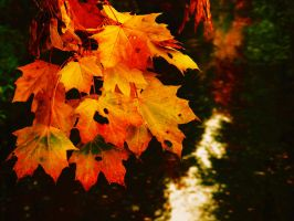 leafs yellow-red by rockmylife