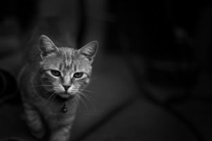 Curious by fatallook