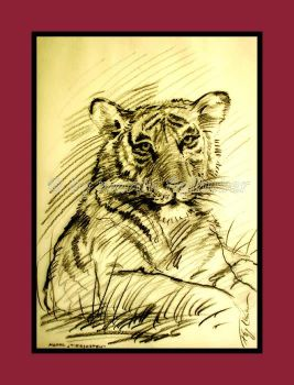 studies of tigers 02 by figlhuber