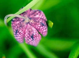 Atop the checkerboard chess flower by bexa