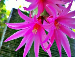 christmas cactus and fountain by nandamicole