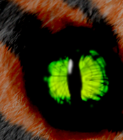 Eye of the Tiger by My-God-Issa-Girl