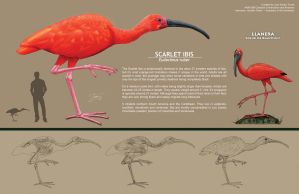 Scarlet Ibis (Comp) by EtherealProject