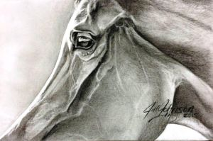 Eye of an Arabian by GeorgiaHorsepainter
