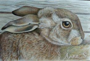 A Hare by ANNightflight