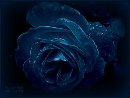 Pearls of Night by MagicBlanche