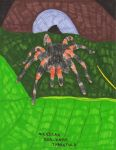 Mexican Red Kneed Tarantula by TheOneTrueSirCharles