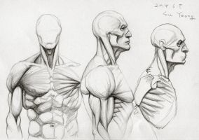 Anatomy Study 2014.06 by Kimsuyeong81