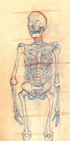 Skeleton Study - Front by NeoWolf06