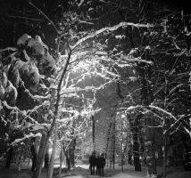Night snow bw park II by voldemometr