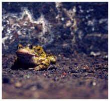 frog by divinedecay