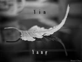 Yin And Yang by SCKW