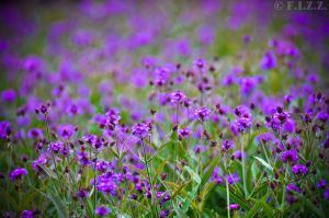 Violet Flowerbed by thechevaliere