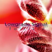 LOWGRADE SIGNAL - follicle by RoadKillConcepts