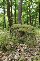 Mossy log Stock 07 by Malleni-Stock