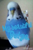 My Budgie Bobby by SatanTheKing