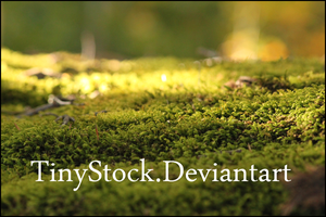 Moss 3 by TinyStock