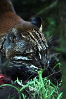 Golden Cat at Dusk by Shadow-and-Flame-86