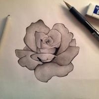 Shaded rose by jaybirdlovesart
