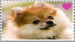 Pomeranian fan stamp by Nei-Ning