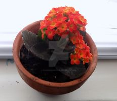 Kalanchoe Close-up by PioneeringAuthor