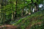 Lady's Walk HDR by JimPMM