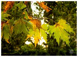 Autumn Leaves 3 by etsap