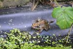 No Croaking! by MrWitchblade