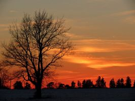 The Tree at Sunset... by Michies-Photographyy