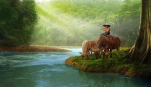 shepherd on the side river by cc-line