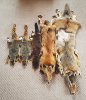 Tanned Pelts by reckIess