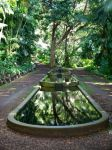 Tropical fountain stock by sylvanidoir
