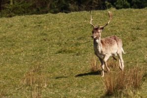 Prancer by GMCollins