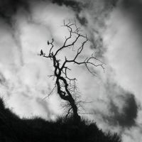 Soul TreE III by incisler