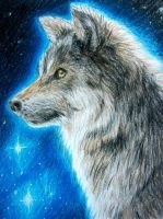 Lone Wolf by SpartanB214