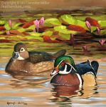 Wood Ducks and Lilies, Study by Nambroth