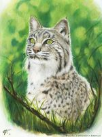 Lynx by FrancescaBaerald