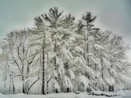 Snow Trees  HDR by Tom-MacPherson
