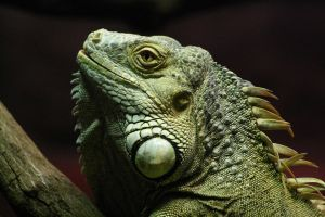 Lizard Profile by FreeakStock