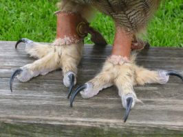 Otto's Talons by JohnMKimmins