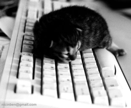 On the keyboard by nicinben