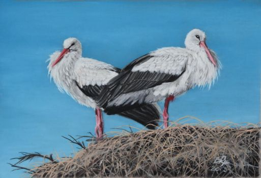 Storks and pastelpencils by riksons