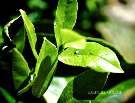 Tiny Rainforest by MsGabrielle